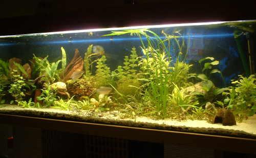 http://www.zierfischforum.at/bilder/owner/aquarium.jpg