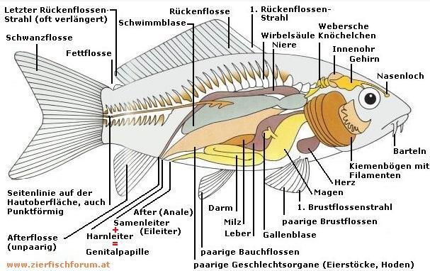 Untersuchung zum Stand der Technik von Fischschutzanlagen und ...