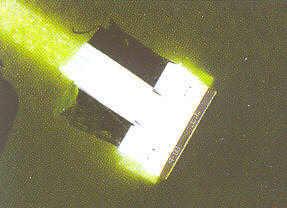 fl chige algen gr nalgen zierfischforum. Black Bedroom Furniture Sets. Home Design Ideas