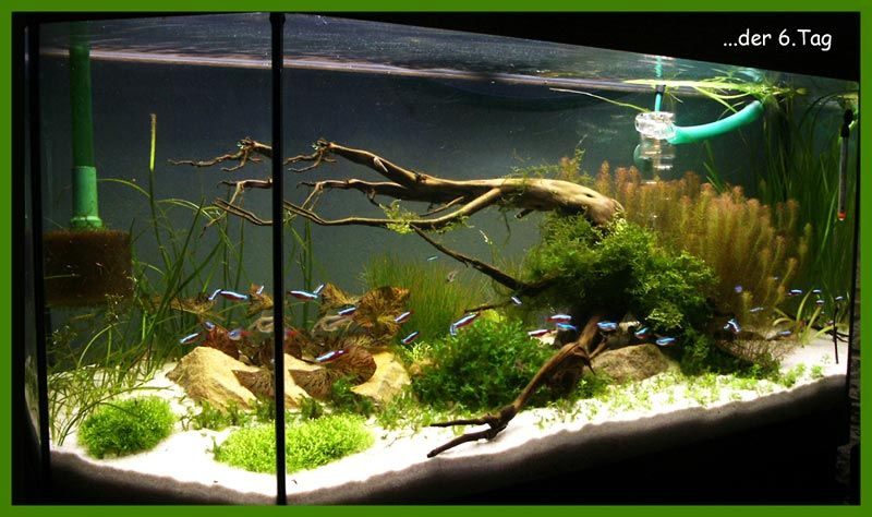 aquarium dekorieren ideen kz28 startupjobsfa. Black Bedroom Furniture Sets. Home Design Ideas