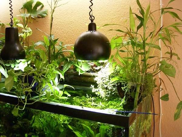 Bambus Im Becken Zierfischforum At